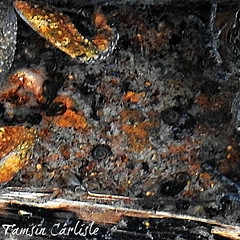 Freshwater Snails (tinlight7) Tags: snails freshwater hayl fujairah uae taxonomy:kingdom=animalia animalia taxonomy:phylum=mollusca mollusca taxonomy:class=gastropoda gastropoda חלזונות gastéropodes 복족류 gasteropodi gastropods caracolesbabosasyparientes snailsandslugs gastrópodes schnecken 腹足綱 taxonomy:common=חלזונות taxonomy:common=gastéropodes taxonomy:common=복족류 taxonomy:common=snails taxonomy:common=slugs taxonomy:common=gasteropodi taxonomy:common=gastropods taxonomy:common=caracolesbabosasyparientes taxonomy:common=snailsandslugs taxonomy:common=gastrópodes taxonomy:common=schnecken taxonomy:common=腹足綱