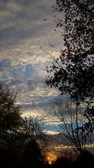 Thankful (GrisParr) Tags: tennessee usa northamerica nature sun sunset sky clouds trees silhouette weather fairweather leaves landscape environment