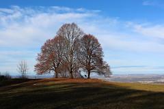 Drei Bume II  Three Trees II (Objektkontrast) Tags: badenwrttemberg schwbischealb jusi herbst autumn