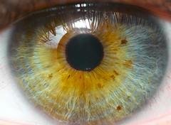 See me see (HSOBERON) Tags: closeup detalles endorinc eye hsoberon macro norebos ojo hernansoberon canon 70d