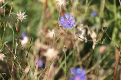 20130720_IMG_0119 (anriro96) Tags: elements heemsen nienburg feld ernte gras getreide blau blue sky rohrsen weser sun summer