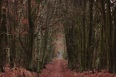 (nettisrb) Tags: herbst autumn fall lane allee weg path bume tree trees forrest waldweg wood