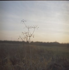 The day before the snow. (sz-m-er.blogspot.com) Tags: meadow evening autumn