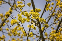 Frühling in schwarz-gelb