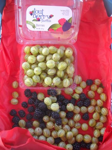 Gooseberries from Nabeh El Safa b Jun 17, 2015