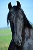 Fries paard (A3impressies) Tags: fries paard paarden paardenhoofd