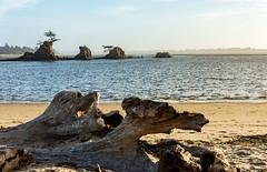 Siletz Bay Islands (pbradyinct) Tags: sunset tree pine oregon island bay sand driftwood shore siletz