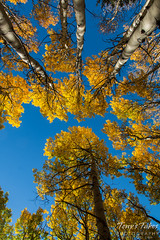 A canopy of gold above the forest