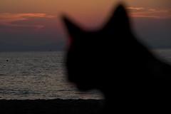 Catclipse (ramosblancor) Tags: sunset sea cats silhouette atardecer eclipse mar profile gatos cover shade puestadesol silueta blocking tapando tapar