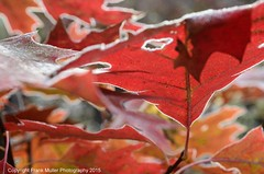 _DSC4522 (1) (frankfoto) Tags: morning autumn frost ithaca fingerlakes westhill ecovillage
