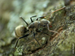 Tera-natureza (macromundo) (sonia furtado) Tags: macro inseto macromundo teranatureza soniafurtado