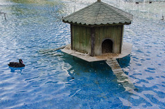 Konya - Cultural Park Duck House Sultanah Caddesi 2 (Le Monde1) Tags: park turkey waterfall nikon islam sultan turkish duckhouse dervish anatolia moslem whirlingdervishes culturalpark kltr sinanpasha d7000 lemonde1 hasanpasha sultanahcaddesi fatmahtun