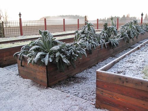 Talvi on tullut Hirvihaaran Kartanon keittiöpuutarhaan
