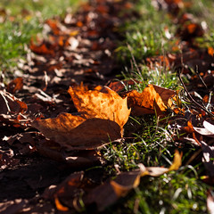 Follow me (Melvinia_) Tags: autumn orange france green fall nature colors leaves automne square 50mm leaf bokeh path vert strasbourg alsace squareformat chemin feuilles feuille carr illkirch feuillemorte formatcarr canoneos450d digitalrebelxsi