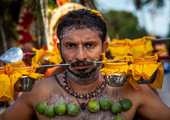 A Pierced Devotee Laden With Lemons On His Chest During The Thaipusam Hindu Festival At Batu Cave, Southeast Asia, Kuala Lumpur, Malaysia (Eric Lafforgue) Tags: shirtless pierced people man men festival vertical horizontal closeup fruit religious outdoors photography lemon asia southeastasia day adult faith religion ceremony garland piercing celebration malaysia devotion hanging ritual kualalumpur spirituality tradition devotee hindu hinduism malaysian cultures abundance pilgrimage batu adultsonly batucaves skewer thaipusam hindi oneperson carrying selangor decorated placeofworship penance 30sadult traveldestinations lookingatcamera onemanonly colourimage 1people indianethnicity kl454