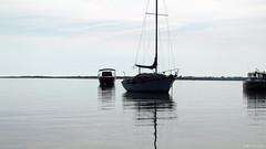 bateau (Pauline) Tags: fleur promenade bateau marais fier leder dars arsenr