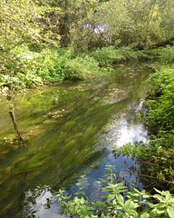 Dunno river (Gjabu) Tags:        dunnoriver river water forest nature landscape moscowoblast