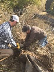 IMG_1433 (Oregon Natural Desert Association) Tags: denny jones ranch weed mat removal 2016 stewardship trips