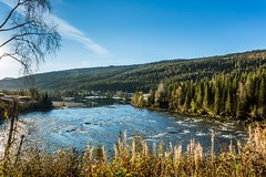 Ranelva Nordland Norway (Einar Schioth) Tags: river ranelva trees tree water autumm autummcolors sky sunshine sun day canon clouds cloud coast shore shadow shadows nationalgeographic ngc norway norge nature nordland landscape photo picture outdoor einarschioth