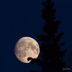 Just before it's full (spwasilla) Tags: tamron150600mm canon7d lunar nightsky night moon