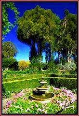 """The Garden"" (""SnapDecisions"" photography) Tags: brushstroke bernardus carmel garden california nikon d800 hirschfeld"