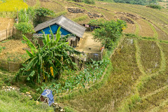 Sapa, Vietnam (DitchTheMap) Tags: architecture building landscape nature outdoors seasia sapa vietnam wildlife background beach blue brown flickr flower grass house hut huts illustration isolated natural ocean palm paradise pattern philippines plant relax roof rural scene shack straw summer sweet thatch thatched toucan tourism tree tropical vector vintage white wooden
