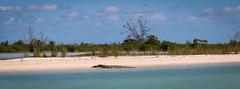 Crocodile (E. Hanson) Tags: mexico ascensionbay caribbean adventure tropical wild yukatan