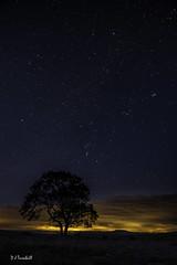 Malham_Lings_20161010_11180 (Rural Dave) Tags: dales lonetree malham malhamtree night nightsky tree yorkshire stars