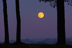 Luna llena (Mimadeo) Tags: moon fullmoon yellow night forest landscape full nature light tree sky dark background scenic dusk pine moonlight trees silhouette