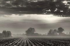 Misty morning (Zero in Condotta) Tags: fog mist nebbia foschia alberi albero trees canon 6d bianco nero white black bw landscape paesaggio soul anima malinconia melancholy dream sogno
