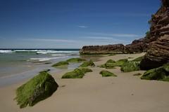 Touches of green (jack eastlake) Tags: wild beaches far south coast nsw aus eden wonboyn sea seascape