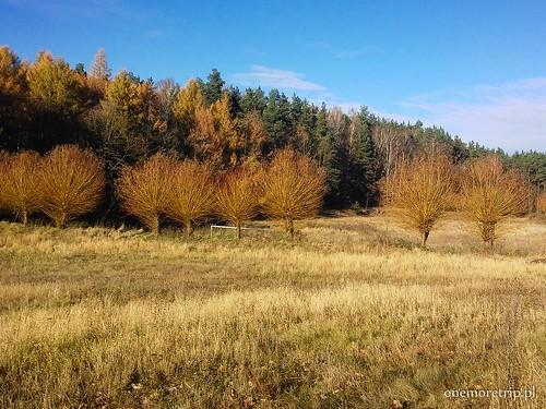 161114-130400-luboradza lasy