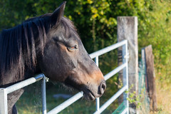 une simple barriere (rascal76160) Tags: cheval horse animal animaux