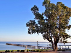 Streaky Bay on Eyre Peninsula. The town jetty was built between 1891 and 1896. Morning light and huge eucalyptus tree. (denisbin) Tags: eyrepeninsula streakbay flinders bay coast jetty pier councilchamber cemetery walledcemetery dragonboatclub dragonboats gumtree eucalyptus
