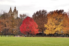 Red, yellow, green, San Remo (ZoKë) Tags: westside greatlawn yellow green red colors fallfoliage centralpark newyorkcity architecture sanremo