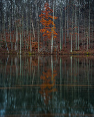 autumn reflections (swartzfeger) Tags: lake tree orange water longexposure nature landscape reflection filter neutraldensity outdoor formatthitech autumn fall leaf leaves