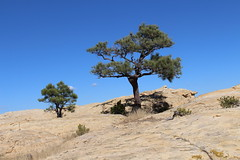 El Morro (lars hammar) Tags: elmorro nationalmonument newmexico tree rock