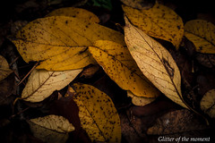 2016 11 20 - 120755 0 Canon EOS 6D (Illusion of light and shadow) Tags: canon eos 6d ef100mmf28lmacroisusm macro depthoffield silence outdoor plant plants blackbackground shadow light cross autumn fallenleaves foliage