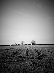Sown (Andrew.King) Tags: trees field tracks crops harvest sow sown brampton valley way fields blackandwhite monochrome nikon d7100 portrait composition landscape vignette contrast hedges hill