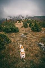 My friend (Djordje Petrovic) Tags: mountain dog fog nature tokina1224mm