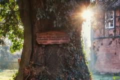 Traueresche (Michael Lumme) Tags: baum bume trees tree abbenrode standreas standreaskirche kirche soldat franzsischersoldat frankreich 1806 nordharz natur nature harz grab grabmal photography photomicha sonne sunset sun sonnenstrahlen canon canoneos70d eos70d facebook facebookpage landschaft landscape