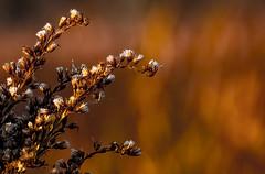 Where the light is..... (tomk630) Tags: virginia sunrise light colors plant bokeh wow