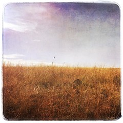 Dirty plains     #wichitamountains #wichitamountainswildliferefuge #lawtonoklahoma #lawton #prairie #mobilephotography #iphoneography #iphone #iphone6s #stackables #stackablesapp #grunge #grungy #landscape #oklahomalandscape (yosmama151) Tags: instagramapp square squareformat iphoneography uploaded:by=instagram wichitamountainswildliferefuge wichitamountains landscape grungy grunge stackables stackablesapp oklahomalandscape lawton lawtonoklahoma