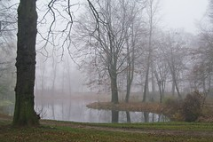 in the park... (green_lover) Tags: park pond mist fog trees yrardw poland autumn fall water
