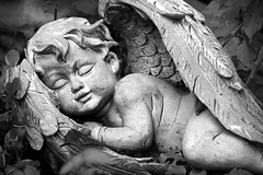 Cherub (Photato Jonez) Tags: cherub lansing michigan alex day alexander park zoo potter angel sculpture blackandwhite vignette