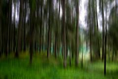Imminente Fuga Psicolore (Roberto -) Tags: green forest foresta verde alberi tree long exposure movement movimento verticale braies trentino alto adige sudtirol lake lago