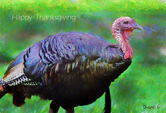Happy Thanksgiving (Diane G. Zooms---Mostly Off) Tags: happythanksgiving thanksgivingphotos holidayphotos dianegiurcophotography fantasticnature coth coth5 sunrays5 ngc npc