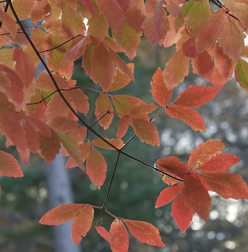 """Autumn Prayer • <a style=""""font-size:0.8em;"""" href=""""http://www.flickr.com/photos/52364684@N03/31056795631/"""" target=""""_blank"""">View on Flickr</a>"""
