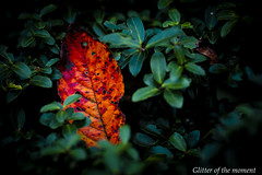 2016 11 26 - 150939 0 Canon EOS 5D Mark III (Illusion of light and shadow) Tags: canon eos 5dmarkiii ef135mmf2lusm plants flowers depthoffield silence outdoor plant flower petal blackbackground shadow light cross green autumn fallenleaves