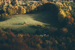 Lone Tree (freyavev) Tags: lonetree tree trees autumn autumnwhimsy autumncolors green yellow orange shadows vsco landscape outdoor königstein sachsen saxony sächsischeschweiz elbsandstein elbsandsteingebirge elbesandstonemountains idyllic
